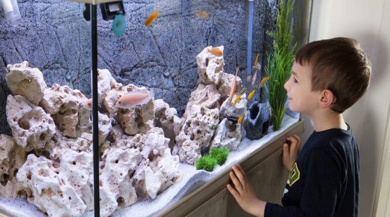 aquarium et enfant