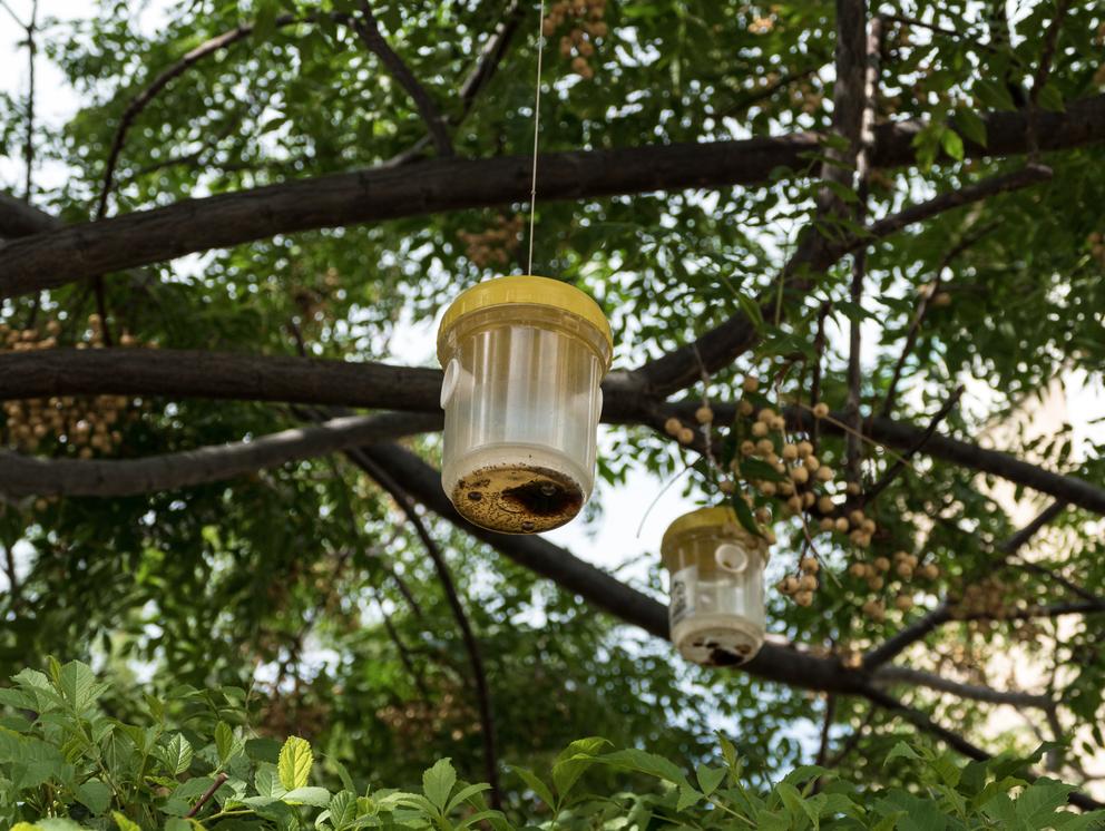 tunedln-protection-insectes-maison-et-jardin