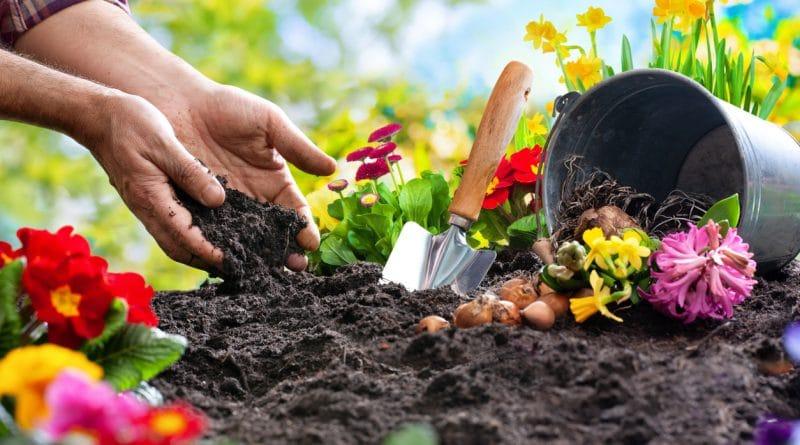 jardiner en juillet