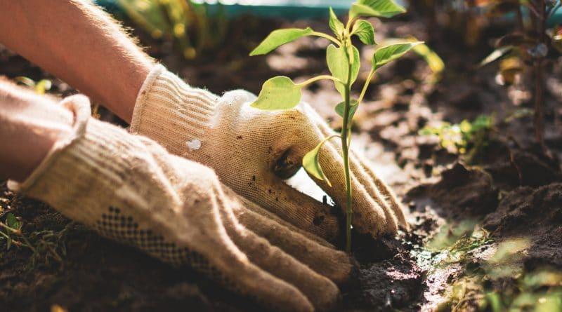jardiner éco-responsable