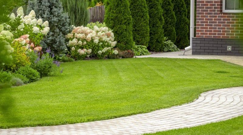 belle pelouse