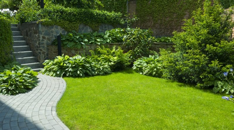 Que faire en juin dans votre jardin ?